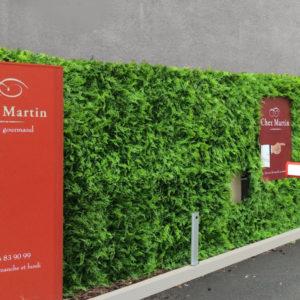 mur végétal fougère